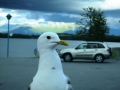 We were eating pizza in the van and a seagull decided to wait on the hood of the van for some scraps.