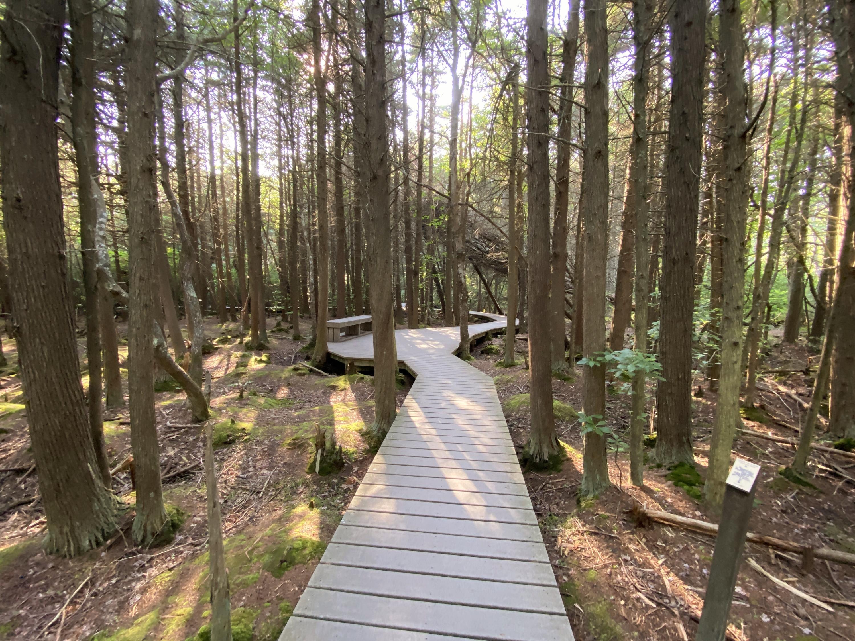 White Cedar Trail on Cape Cod, MA