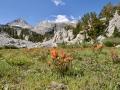 Mountain flowers in the Eastern Sierras.