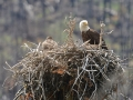 It was fun to see the local wildlife :). I had no idea bald eagle chicks were so fugly.