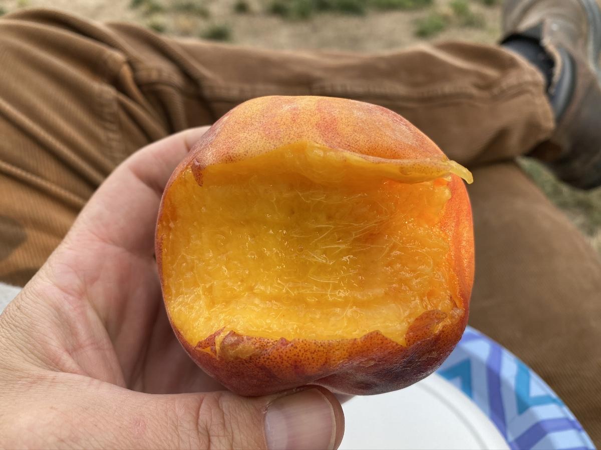 Colorado Peaches - pure bliss!