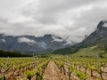 Lots of wineries and vineyards around Croatia.