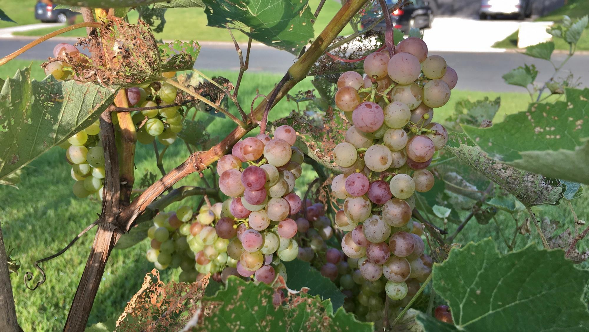 Fruit harvest :)