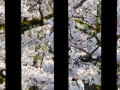 Himeji Castle grounds.