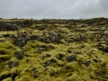 There's a lot of volcanic rock in Iceland with moss growing all over the rock.