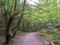 Super green trails in Killarney National Park, Ireland.