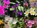 Israel has a lot of color and is very beautiful, we saw flowers wherever we went!