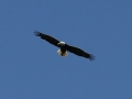 'Murica. Obligatory eagle photo.