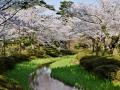 Kanazawa garden.