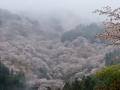 Yoshino, Japan.