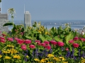 Flowers on top of Mount Royal in Montreal.