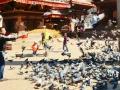 A local feeding the pigeons at Durbar Square in Kathmandu.