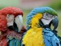 Pretty birds.