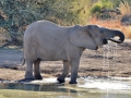 Some elephants had a hard time drinking water.