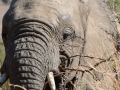 Elephants can eat bushes that have huge thorns on them.