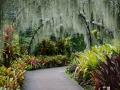 Garden walk in Singapore.