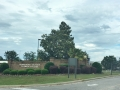 MASSIVE Magnolia trees!