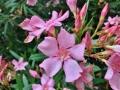 Pretty flowers in SC