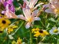 Our flower garden!
