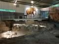 Columbian Mammoth National Monument in Waco, TX