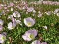 Flowers in bloom around DFW
