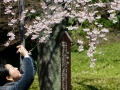 Pretty much everyone takes photos of cherry blossoms like this.