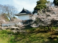 Cherry blossoms and a gate of the Imperial Palance in Tokyo!