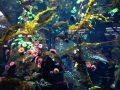 Huge aquarium in the Vancouver international airport.