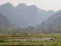 Rice farming in Vietnam.