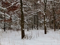 Winter in Rochester, MN