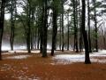 Winter, Albany, NY