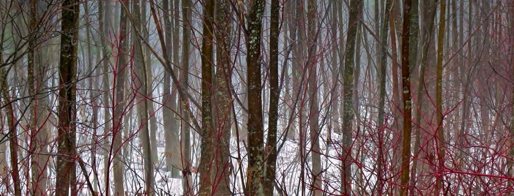 Winter-fog-Albany-NY