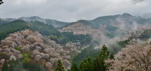 Yoshino-Japan